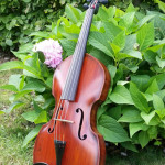 Viola antique